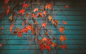 Обои листья, ветки, дерево, оранжевые