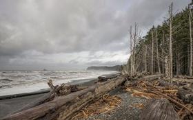Картинка море, деревья, берег