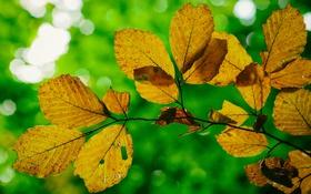 Обои макро, ветка, свет, блик, осень, листья