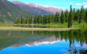 Обои лес, деревья, горы, озеро, небо