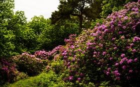 Картинка деревья, цветы, природа, trees, flowers, bushes, кустарники
