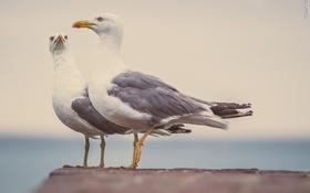 Обои глаза, лапки, перья, чайки. птицы