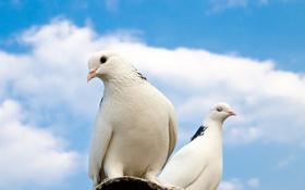 Обои крыша, небо, облака, голуби, sky, clouds, pigeons