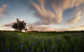 Картинка поле, трава, облака, цветы, дерево, Болгария, Плана