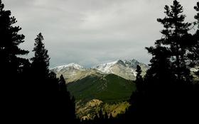 Обои небо, облака, деревья, горы, ель