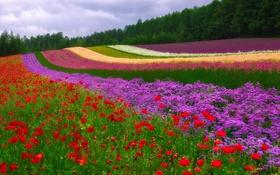 Обои цветы, деревья, поле, пейзаж