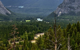 Обои лес, деревья, горы, река, долина, Канада, Альберта