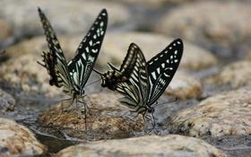 Обои вода, бабочки, камни, водопой