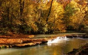 Обои осень, лес, листья, деревья, ручей, желтые, солнечно