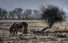 Обои поле, конь, метель