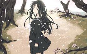 Картинка деревья, Девушка, лепестки, школьная форма