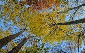 Обои осень, небо, листья, деревья, ствол