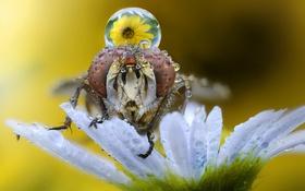 Обои макро, фон, насекомое
