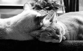 Обои котэ, коты, отдых, кошаки