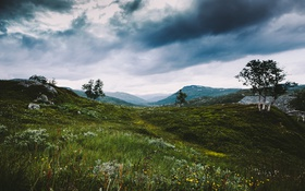 Обои grass, trees, flowers, clouds, hills