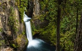 Обои лес, деревья, скала, камни, водопад, мох, США