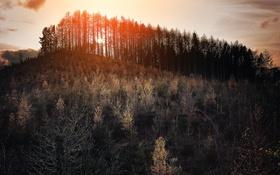 Картинка лес, свет, пейзаж