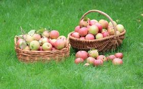 Обои корзина, яблоки, травка