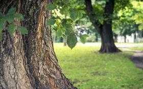 Картинка лето, листья, дерево, зеленые, кора