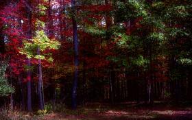 Обои осень, лес, листья, цвета, деревья