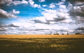 Обои пшеница, поле, небо, тучи, тень, линии электропередачи, поле пшеницы