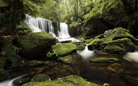 Обои лес, деревья, ручей, камни, водопад, мох