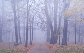 Картинка осень, листья, деревья, туман, путь, кресты