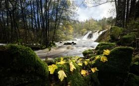 Обои листья, река, природа
