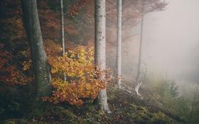 Обои туман, ветви, деревья, осень, лес, листья