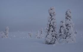 Обои зима, снег, деревья, Финляндия, Лапландия