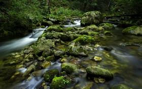 Обои лес, река, камень, водопад, поток, слизь, коряги