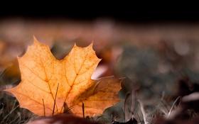 Обои природа, осень, лист