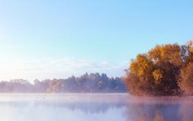 Обои небо, облака, деревья, туман, озеро, восход, утки