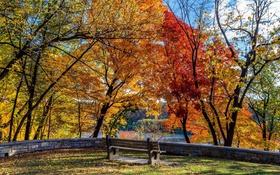 Картинка осень, солнце, деревья, парк, река, тени, стендовые