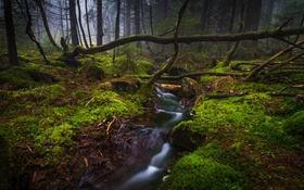 Обои forest, fog, plants, stream, moss