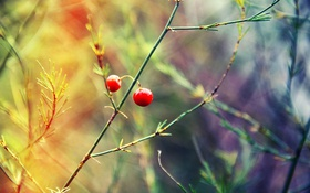 Картинка лето, трава, бусинки