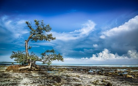 Картинка море, небо, облака, дерево, берег, отлив