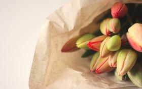Картинка цветы, тюльпаны, бутоны