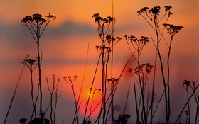 Картинка небо, облака, закат, растение, вечер, силуэт