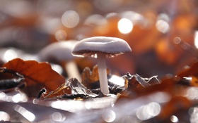 Обои природа, фон, грибы