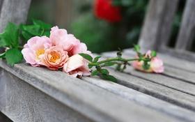 Обои flowers roses, розы, лавочка, цветы, shop