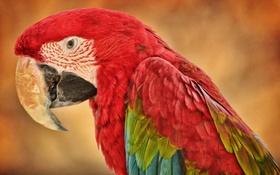 Обои природа, птица, попугай