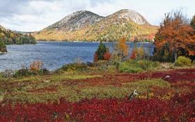 Обои США, осень, трава, озеро, деревья, кусты, Acadia National Park