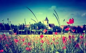 Обои поле, небо, цветы, стебель, церковь