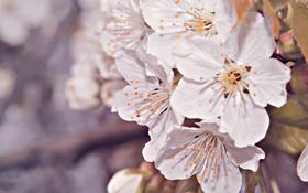 Обои цветы, лепестки, боке