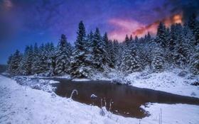 Картинка зима, лес, ночь
