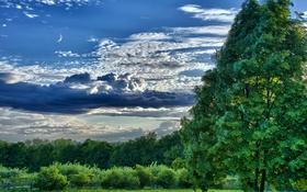 Обои облака, деревья, луг, небо, тучи, луна