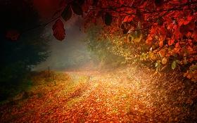 Картинка дорога, осень, листья, деревья
