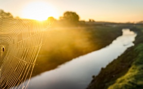 Обои свет, река, паутина, паук, утро