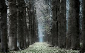 Обои деревья, природа, стволы